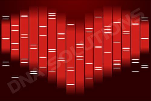 Design Saint Valentin du Portrait ADN double