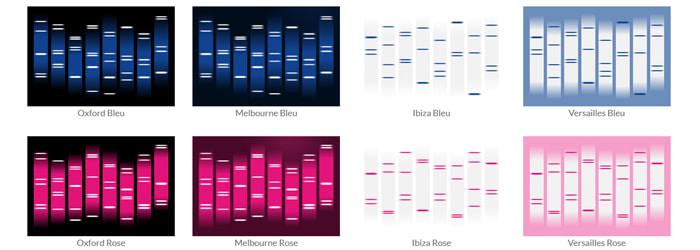 Exemple de quelques designs du Portrait ADN