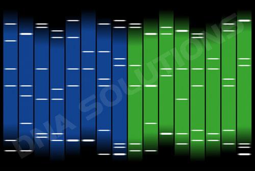 Exemple du Portrait ADN double