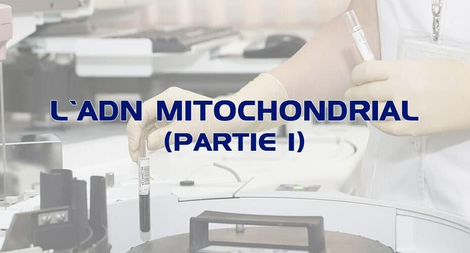 L'ADN mitochondrial (partie 1)