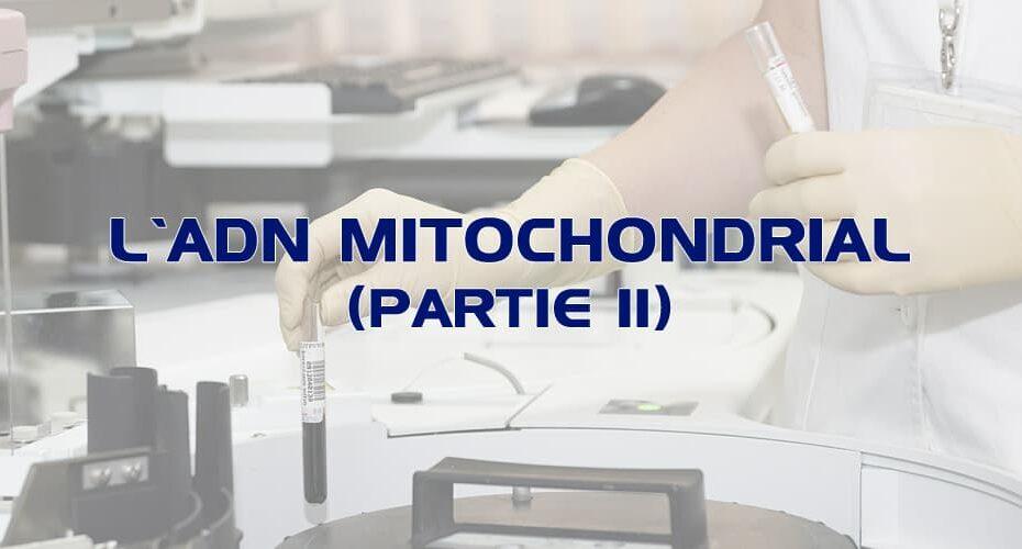L'ADN mitochondrial (partie 2)