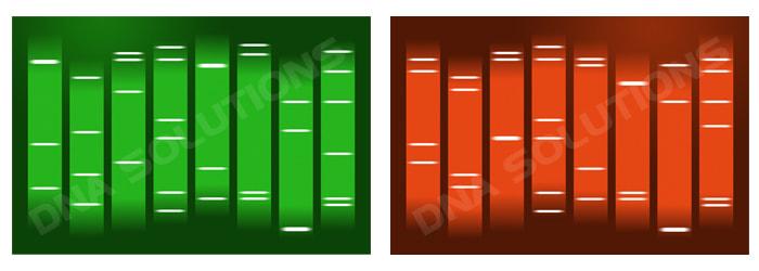 Portraits ADN de faux jumeaux