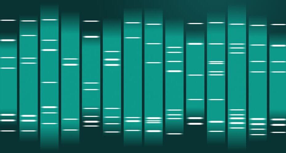 Qu'est-ce le Portrait ADN ou DNA Art ?
