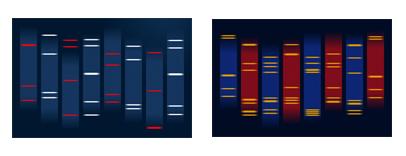 Quelques designs speciaux du Portrait ADN