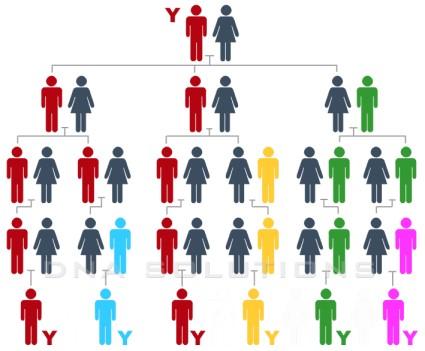 Hérédité du chromosome Y, plusieurs générations