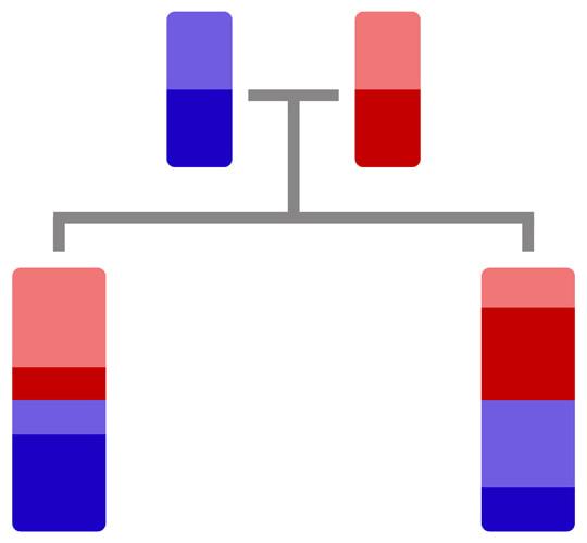 ADN des faux jumeaux