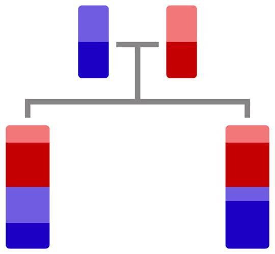 ADN des jumeaux semi-identiques